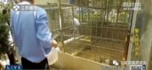立即查处!猕猴、孔雀、黑天鹅……别墅内竟有人把野生动物当宠物养