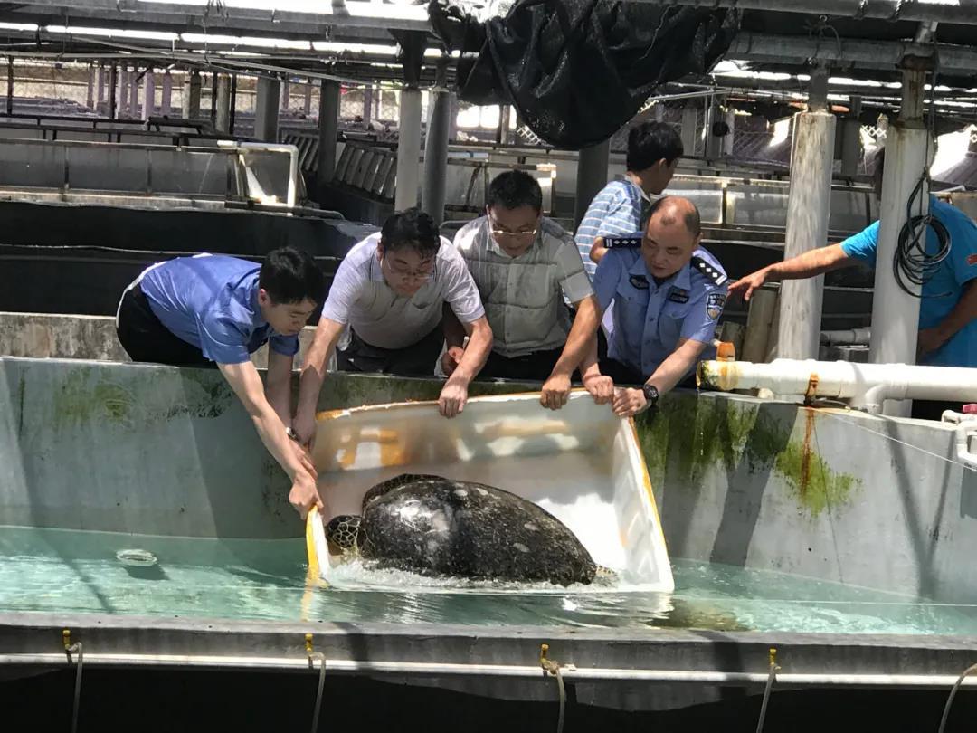 徐州警方查扣活体海龟286只,抓获涉案人员140余人