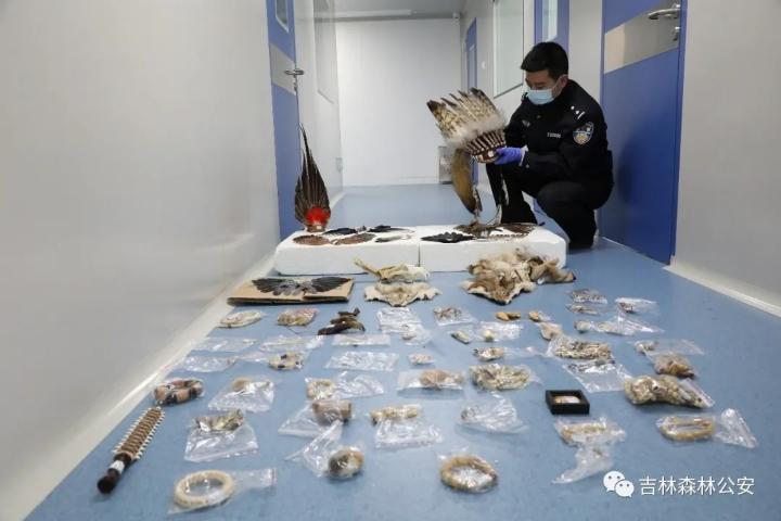 吉林省森林公安机关开展打击破坏野生动物违法犯罪专项行动